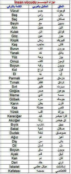 اعضاء الجسم باللغة التركية