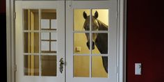 LOOK: This Horse Prefers The Indoors
