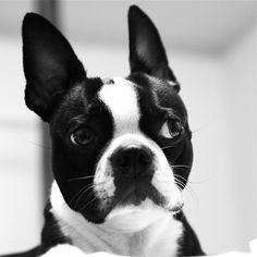 This is what I look like when I hear super-awesome dog stuff, like 'treat', 'dog park', 'car ride' or 'dinner.' Mmmmm. Diiiiiiinner.