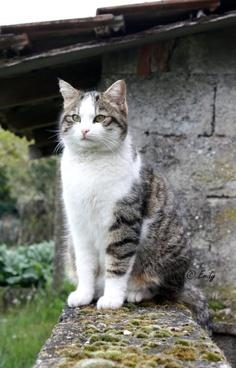 Regal #cat