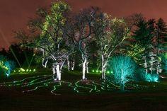 Illumination: Tree Lights At The Morton Arboretum Returns On ...