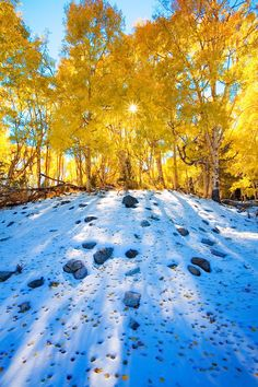 Aspen leaves on the snow, Huerfano National Forest, Colorado.