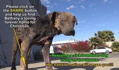 A homeless dog living on the streets gets rescued, transformed and is no... -- a happy ending