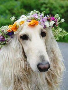 Un invitado muy especial… Viste a tu mascota en tu boda