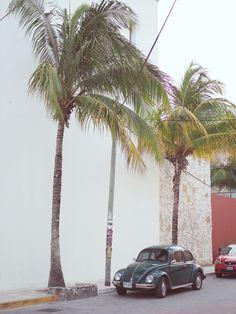mexiko, Käfer, Palmen, playa del carmen