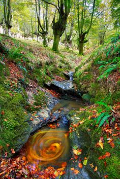 Fall in Beech, Gorbeia Natural Park - Basque Country, Spain