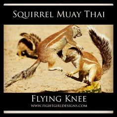 Mauy Thai squirrel style!