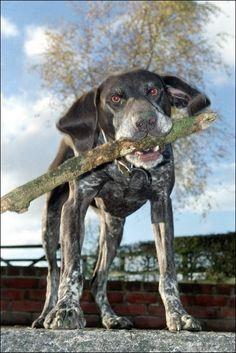 Dogs like sticks