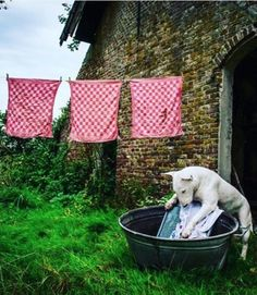 This Dog Explores Abandoned Houses. By Alice van Kempen and her trusty companion, Claire.