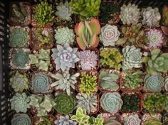Lots of baby succulents!