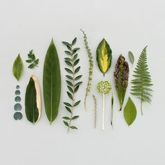 collected treasures - green finds If you want to see more pictures of Cactus arrangements you can se Plants Are Friends, Nature Collection, Leaf Art, Arte Floral, Silkscreen, Botanical Prints, House Plants, Flower Art, Planting Flowers