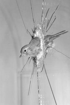 """""""Robin Through Glass"""", by Polly Morgan"""