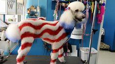 More creative dog grooming.