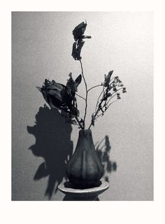 still life, by zarah cassim