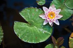 "A surrendering to ""what-is,"" not unlike surrendering to the water when floating on our backs, letting ourselves melt into its flexible support. Description from deborahbrasket.wordpress.com. I searched for this on bing.com/images"