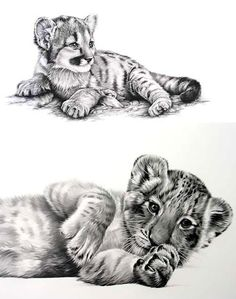 Baby Tiger Tattoo Design