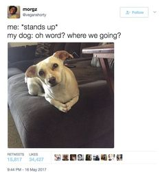 Animals And Pets, Baby Animals, Funny Animals, Cute Animals, Dog Memes, Funny Memes, Ironic Memes, Jokes, Funny Dogs