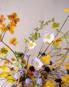 Growing Flowers, Dried Flowers, Lilac Tree, Flower Studio, School Programs, Seed Pods, Flower Farm, Perennials, Flower Arrangements
