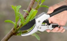 Cheap pruning shears, Buy Quality scissors pruning directly from China bonsai tools Suppliers: Garden Bonsai Tools Professional Steel Bonsai Grafting Cutter Scissors Pruning Shears Fruit Tree Garden Cutting Bonsai Fruit Tree, Fruit Tree Garden, Fruit Plants, Garden Trees, Fruit Trees, Pruning Tools, Pruning Shears, Shears Scissors, New Growth