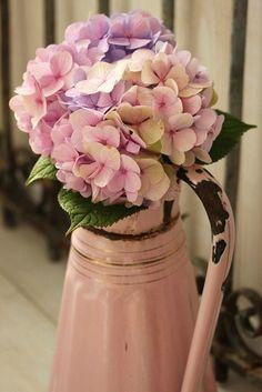 Hydrangeas in a vintage pink enamel pitcher