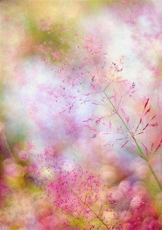Soft - by Magdalena Wasiczek