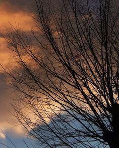おはよーございます。  西には黒い雲。 東から太陽光。 せめぎあう境目が橙色に 燃えておりました。 ドラマチックな朝。  ドラマチックな日を。   #sky #winter #tree #空 #冬 #樹