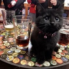 "12.9k Likes, 70 Comments - Cats of Instagram (@kittens_of_world) on Instagram: """"Met this cutie at the bar"" #kittens_of_world and follow us to be featured """