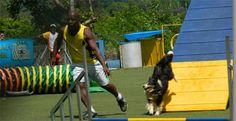 Check out the summary of the last Trials of the XIV Brazilian Championship Agility - Royal Canin. A big mix of competitiveness and fun! Summary, Trials, News, Big, Check, Abstract