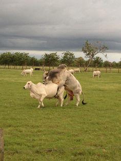 #POSTALESDECAMPO #Ranchlife #Cattle #Horses #Ag