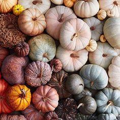 gorgeous pumpkins