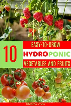 Hydroponics is a technique of growing crops, in water, with no soil.  Nutrients and minerals are put into the water at most advantageous levels to make the plants devote their energy into generating vegetables and fruits. Visit our site for more information. #hydroponics #hydroponicgardening #hydroponicvegetables #hydroponicfruits Hydroponic Vegetables, Root Vegetables, Hydroponic Gardening, Hydroponic Solution, Hydroponics System, Cinnamon Basil, Healthy Foods To Eat, Healthy Recipes, Lettuce Leaves