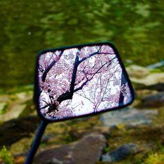 鏡の国の桜。#cherryblossom #sakura #tokyo