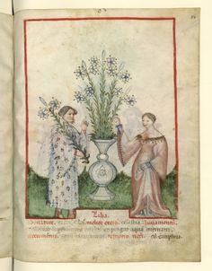 Nouvelle acquisition latine 1673, fol. 84, Récolte des lis. Tacuinum sanitatis, Milano or Pavie (Italy), 1390-1400.  Keywords: embroidery