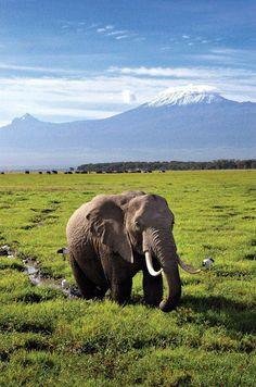 Kilimanjaro.................mi sueño!