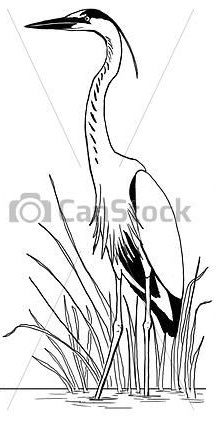 Stock Illustration - Great Blue Heron in reeds - stock illustration royalty free illustrations stock clip art icon stock clipart icons logo line art pictures graphic graphics drawing drawings artwork Bird Drawings, Easy Drawings, Animal Drawings, Watercolor Bird, Watercolor Paintings, Line Drawing, Painting & Drawing, Art Icon, Blue Heron