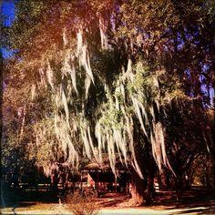Destrehan plantation... It's absolute historic !