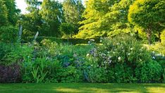 """Several varieties of blue flowers feature in the herbaceous border between the two lawns: """"It's a nightmare of a garden ..."""