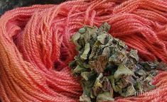 Riihivilla, Dyeing with natural dyes: Dyeing with rhubarb Värjäystä raparperilla