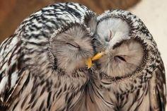 OWL AFFECTION - Pixdaus