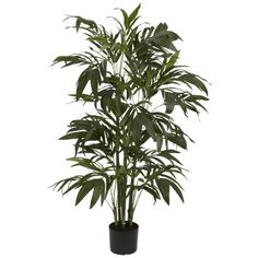 Our four foot high Bamboo palm reaches tall into the sky, spreading its long tapered emerald leaves outward. With 230 leaves thereí´s more than enough greenery to add natureí´s touch to any living are