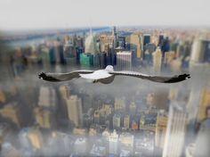 Le photographe Howard Lau nous emmène au plus près des mouettes, en plein vol au-dessus des paysages d'Amérique du Nord.
