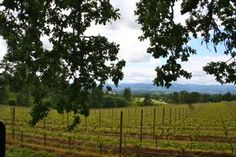 This region is located approximately 30 miles from Portland, Oregon & is known for its Pinot Noir.