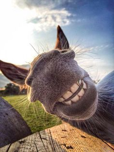 Very interesting post: Funny Animals Causing a Smile Pictures).сom lot of interesting things on Funny Animals. Happy Animals, Animals And Pets, Funny Animals, Cute Animals, Smiling Animals, Horse Pictures, Funny Animal Pictures, Funny Donkey Pictures, Donkey Funny
