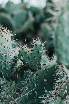 - cactus - You are in the right place about cactus painting Here we offer you the most beautiful pictures abo - Succulents Wallpaper, Cacti And Succulents, Natur Wallpaper, Cactus House Plants, Indoor Cactus, Cactus Drawing, Cactus Painting, Plants Are Friends, Plant Aesthetic