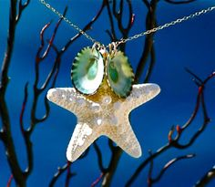 Hey, I found this really awesome Etsy listing at http://www.etsy.com/listing/48853353/real-starfish-and-green-limpet-sea-shell