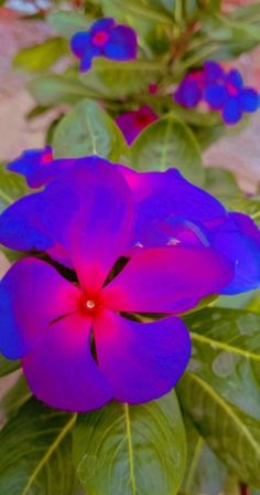 Periwinkle Flowers, Nature, Plants, Photography, Naturaleza, Photograph, Fotografie, Photoshoot, Plant