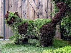Cat topiary - I love this!