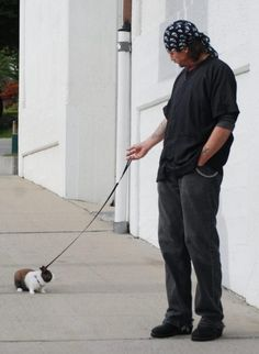 I could really like a man who looks tough but is sensitive enough and secure enough to walk a bunny.  As long as he doesn't drive a Corvette or a Smart Car.