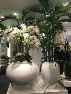 Orchids, palm