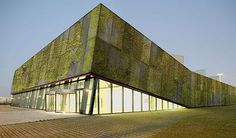 biological concrete for creation of living walls